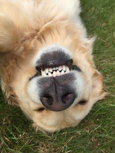 Diesel smiles