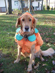 Cooper pumpkin