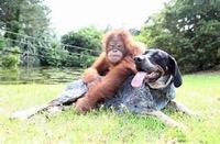 Suyria & Roscoe the dog