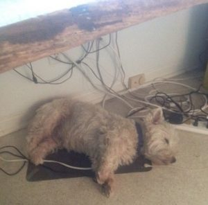 earthing mat pup