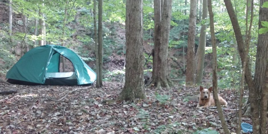 Camping Fun With Your Pup