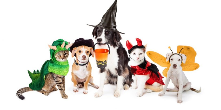 Best Pet Costume Ideas