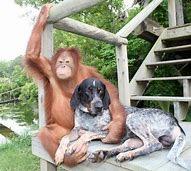monkey and dog