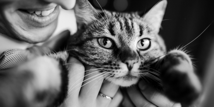 Cat Sitting: A Case for Daily Visits