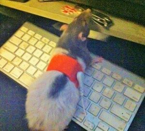 mouse on keyboard